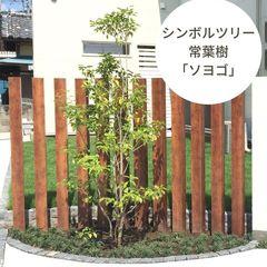 シンボルツリー|常葉樹&低木が人気のソヨゴは玄関にもおすすめ!